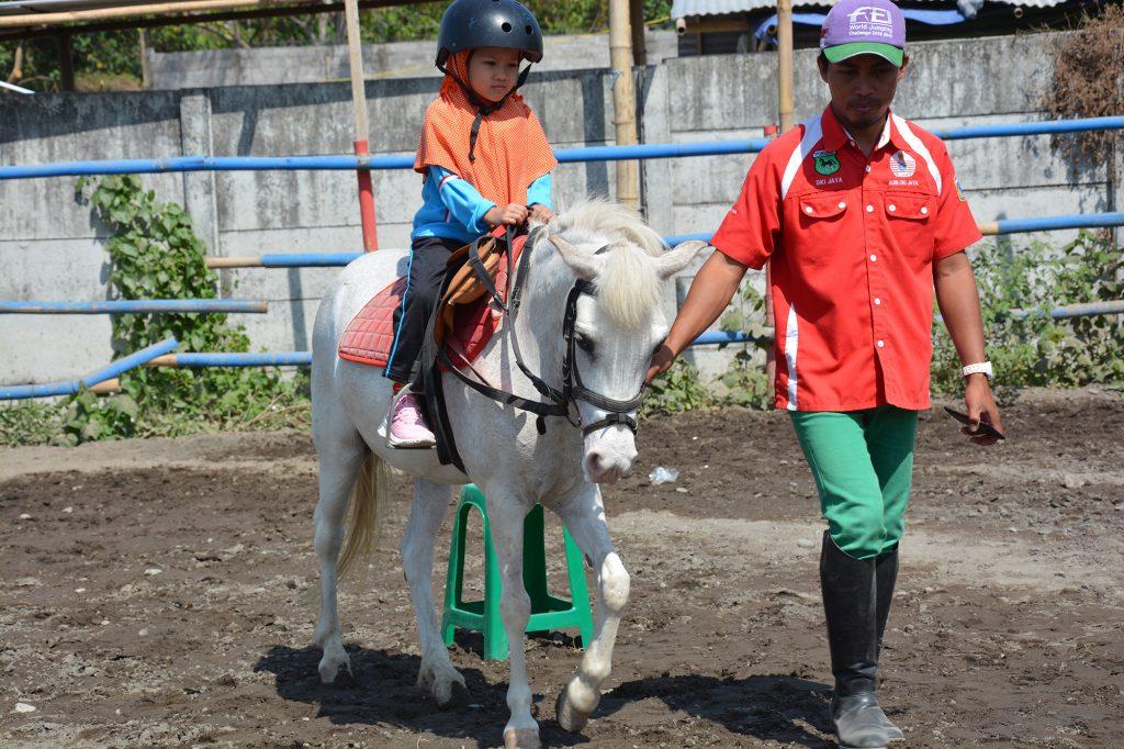 Berkuda 31
